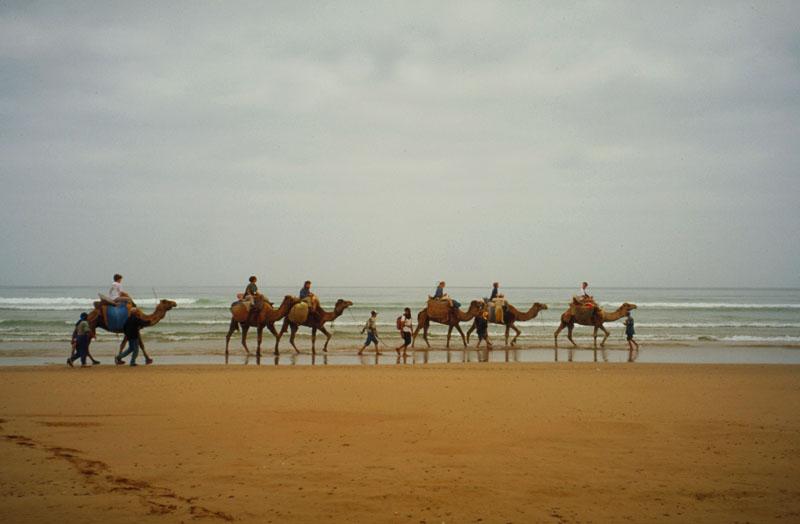 Marokko reisen für ein Kamel-Trekking entlang der Atlantikküste