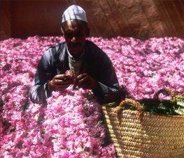 Wanderung im Rosental und Teilnahme am Rosenfestival in Südmarokko
